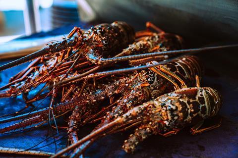 Fresh Lobster shellfish