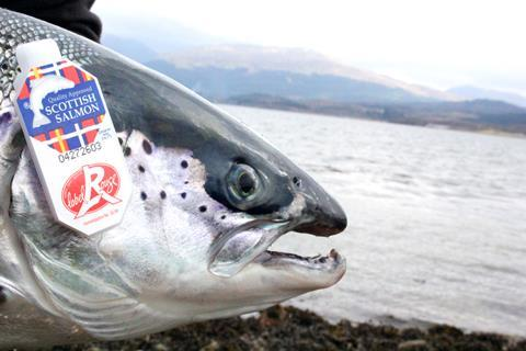 SSPO Scottish Label Rouge Salmon