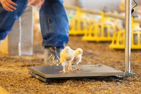 Poultry Sense