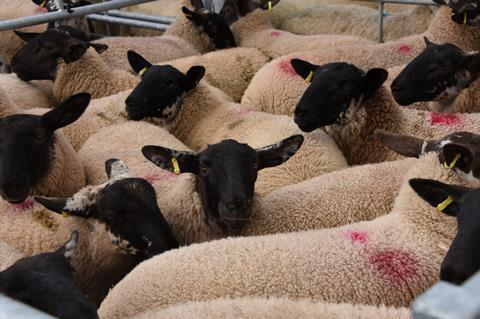 HCC20116 - Trade Disruption Hits Red Meat Industry