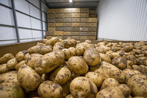 Potatoes in grower store