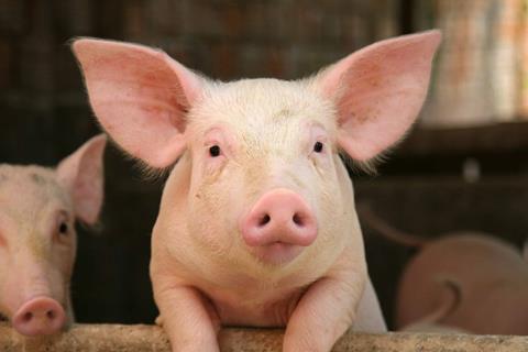 Pig (2)