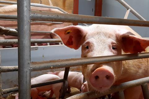 Animal Equality PG Sleigh