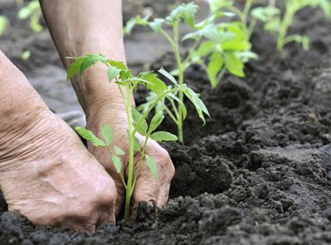 Plant farming